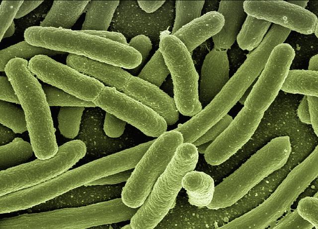 Gestion des alertes sur Escherichia coli