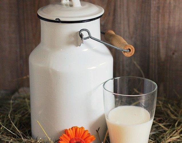 Le lait cru et son traitement